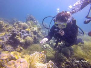 anemonefish batangas