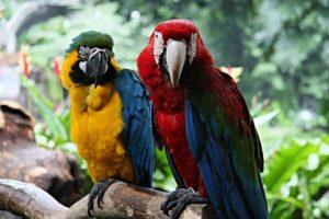 SG Bird Park