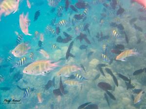 Pambato Reef Palawan