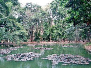 botanical gardens java